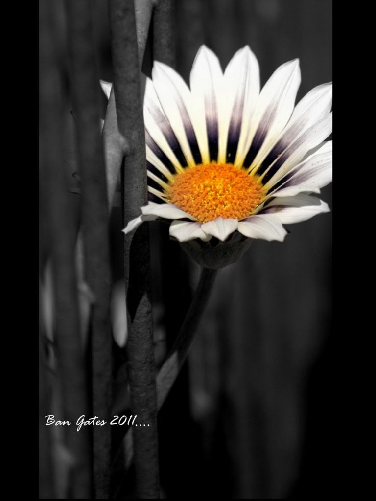 Nature _388