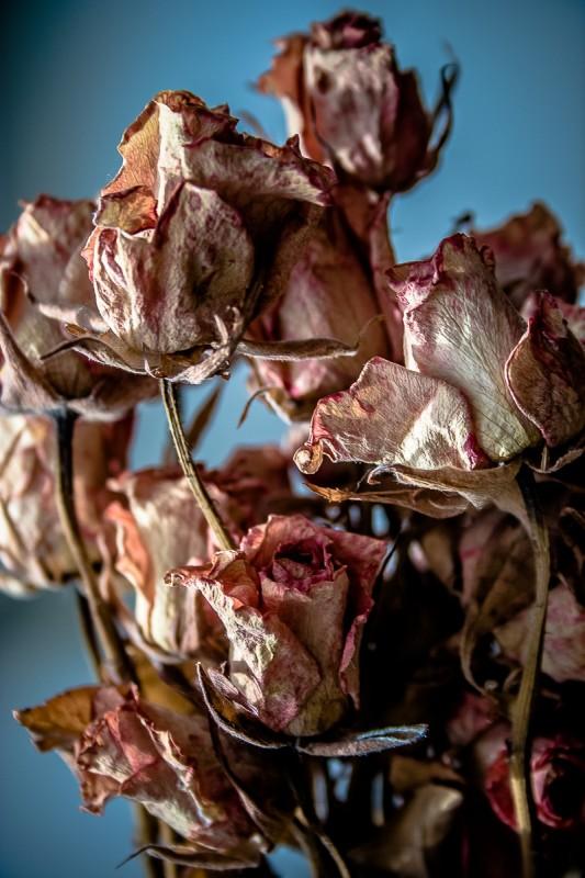 dead-rooses-533x800.jpg